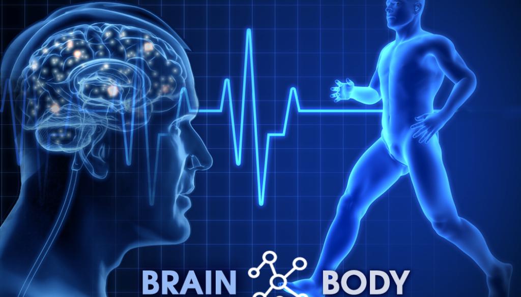 brain and body diagram